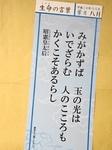 DSC01431.JPG